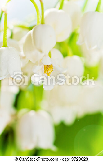 Lilies of the valley, close up - csp13723623