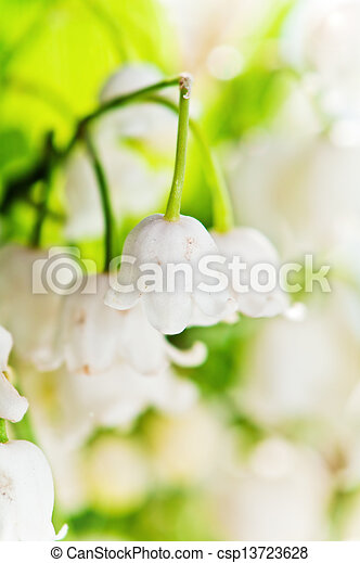 Lilies of the valley, close up - csp13723628