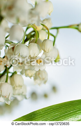 Lilies of the valley, close up - csp13723635