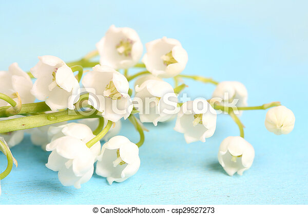 lilies of the valley on a blue wooden background - csp29527273