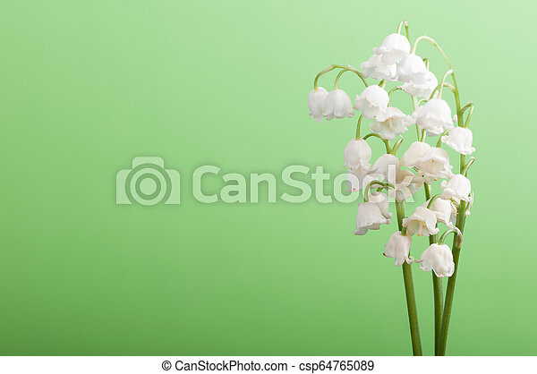 lilies of the valley on a green background - csp64765089