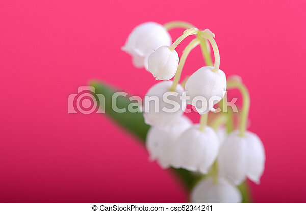lilies of the valley on a red background close up - csp52344241