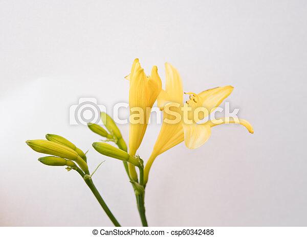lilium flowers isolated over white - csp60342488