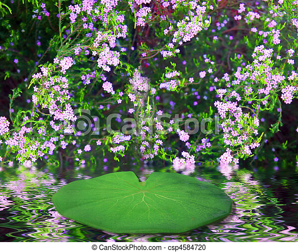 Lilly Pad Fairy Fantasy Background - csp4584720