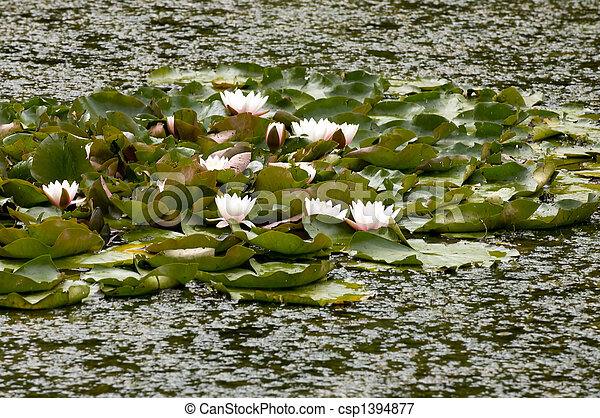 Lilly Pads - csp1394877