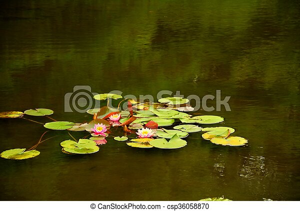 Lilly Pads - csp36058870