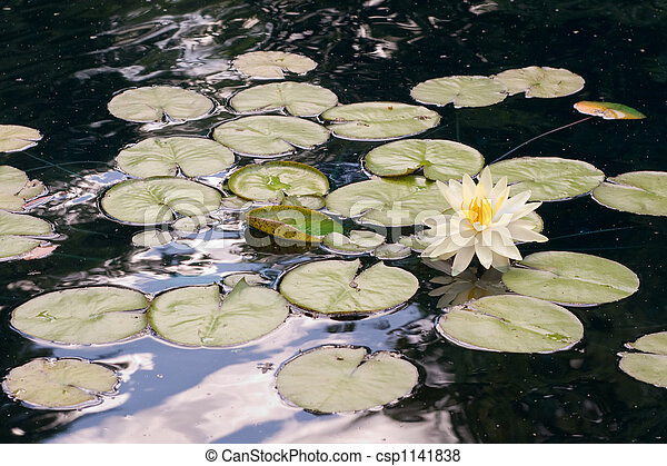Lilly Pads - csp1141838