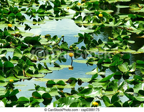 Lilly Pads - csp0388175
