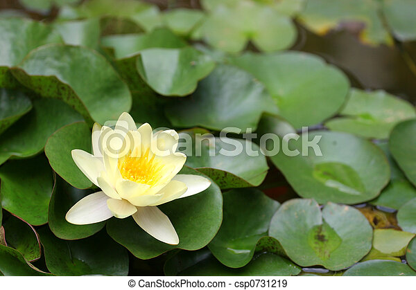 Lilly Pads - csp0731219