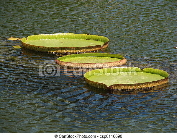 Lilly Pads - csp0116690