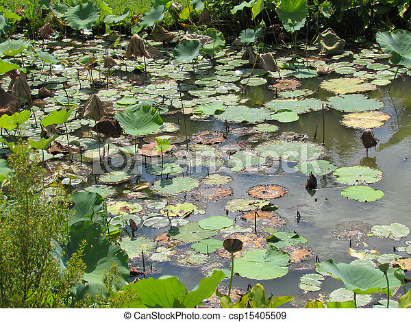 Lilly-pads - csp15405509