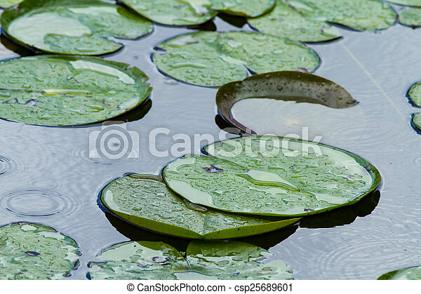 Lilly Pads - csp25689601