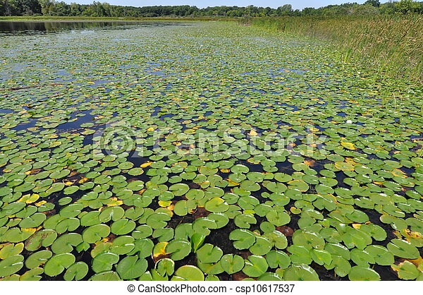lilly pads - csp10617537