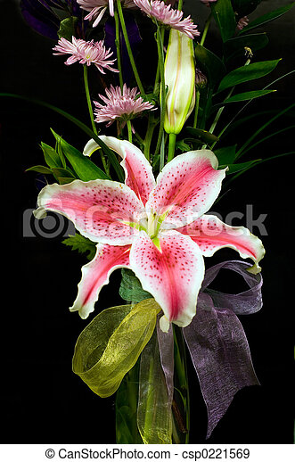 Lilly - csp0221569
