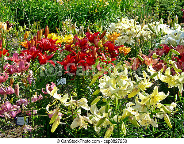 Lily Garden Beautiful Botanical Garden With Daylily And Many
