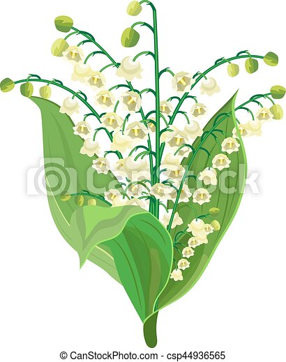 Lily Of The Valley - csp44936565