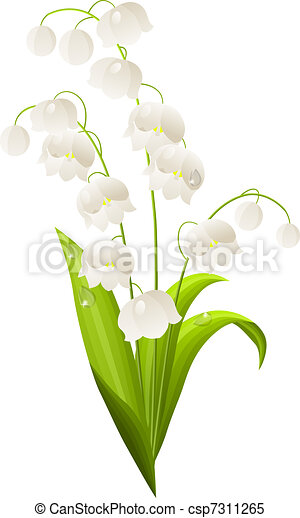 Lily of the valley isolated on white background - csp7311265