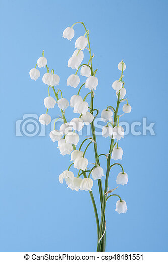Lily of the valley on a blue background - csp48481551