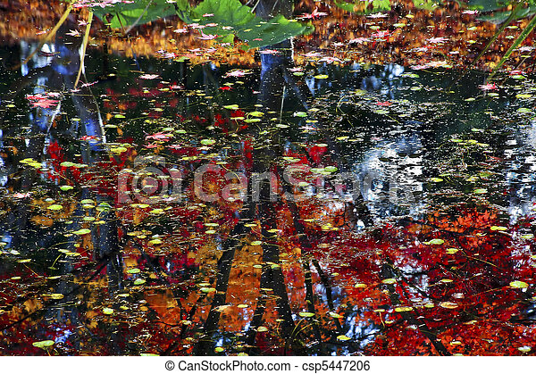 Lily Pads Fall Colors Water Tree Reflections Yellow, Green Red Blue Van Dusen Gardens Vancouver British Columbia Canada - csp5447206