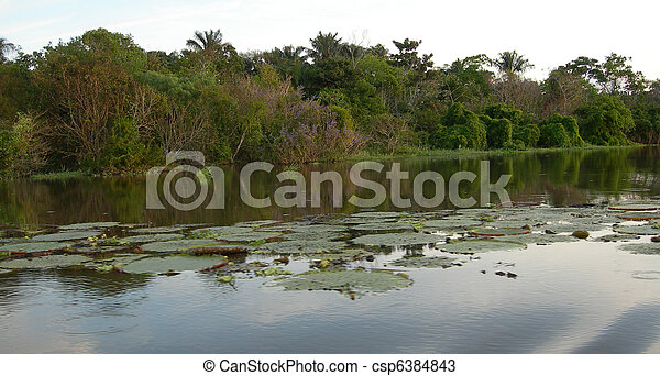 Lily pads in lagoon           - csp6384843