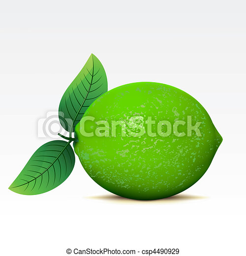 Lime - csp4490929