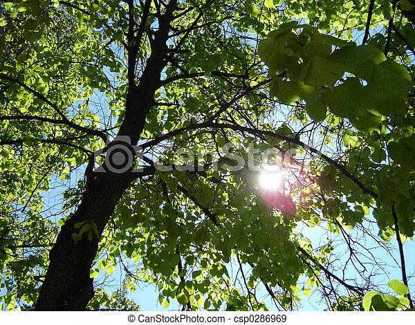 lime-tree - csp0286969