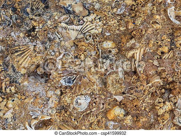(limestone), altes , muschelkalk, beschaffenheit - csp41599932