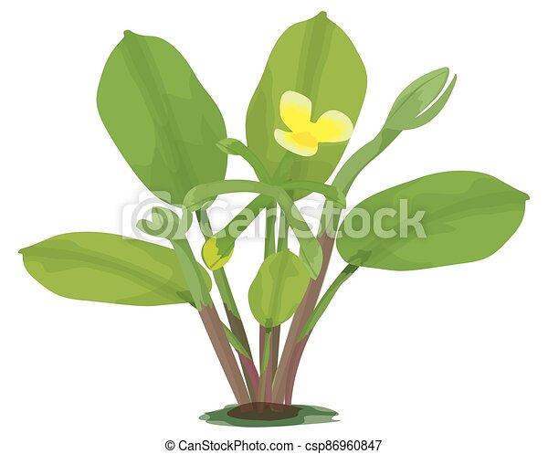 Limnocharis flava plant on white background vector design - csp86960847