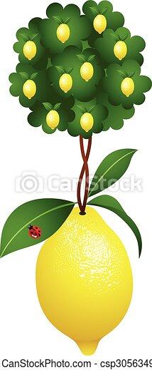 Limón en limón - csp30563490