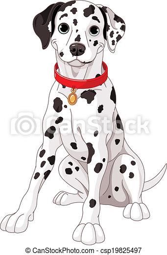 Lindo perro dálmata - csp19825497