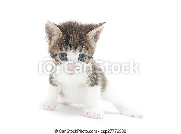 Lindo gatito en un fondo blanco - csp27776382