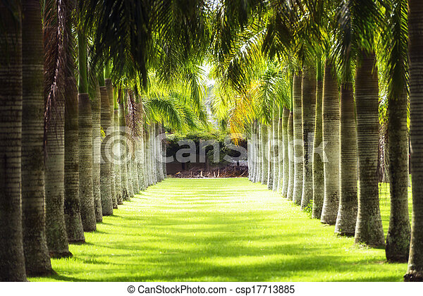 line of palm trees in the park - csp17713885