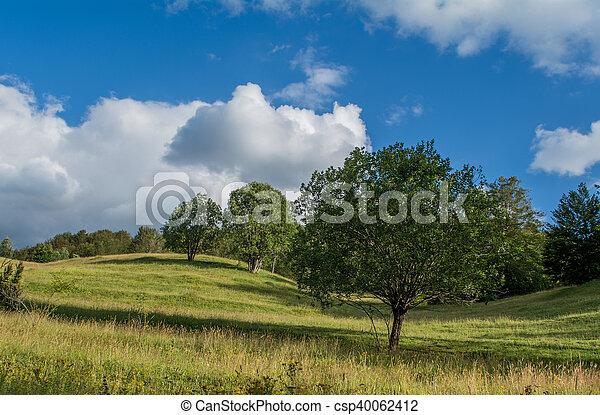 Line of trees - csp40062412