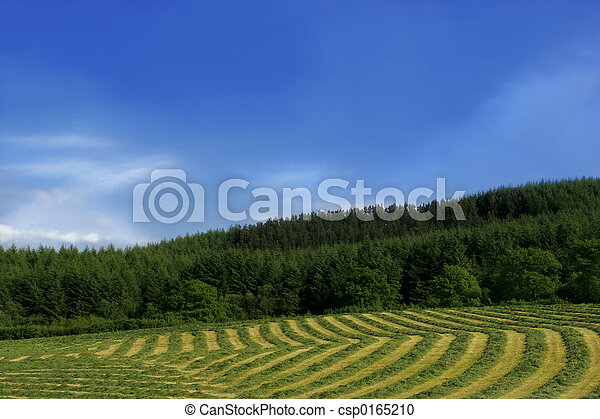 Lines and Curves of Hay - csp0165210