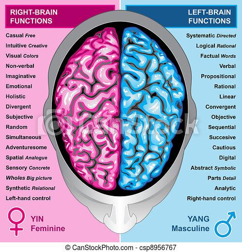 links, gehirn, recht, menschliche , funktion - csp8956767