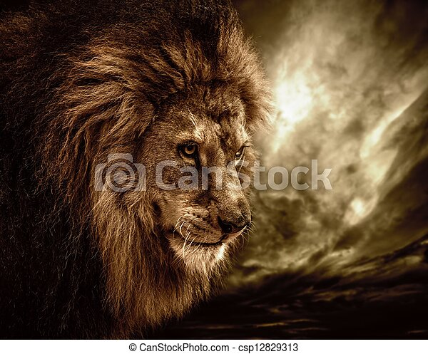 Lion against stormy sky  - csp12829313