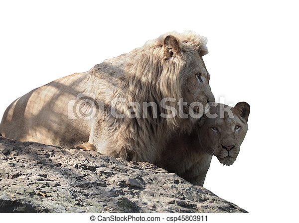 Lion and lioness couple of lovers at the top of mountain isolated on white - csp45803911