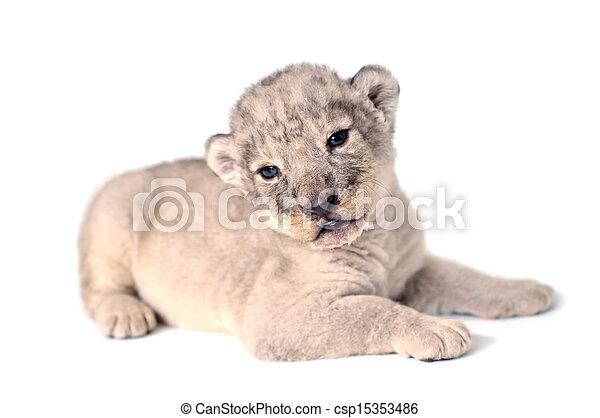 Lion cub - csp15353486