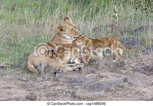 Lion cubs caregiving - csp1486046