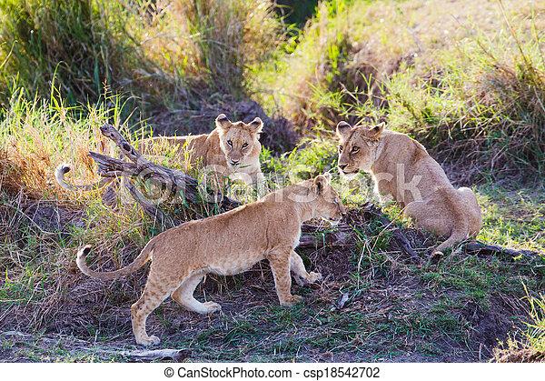 Lion cubs playing in Serengeti - csp18542702