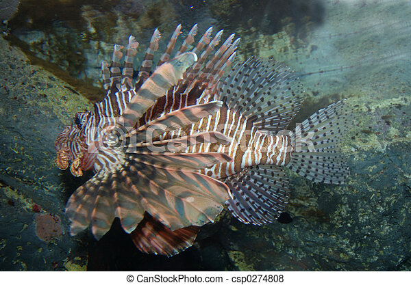 Lion Fish - csp0274808