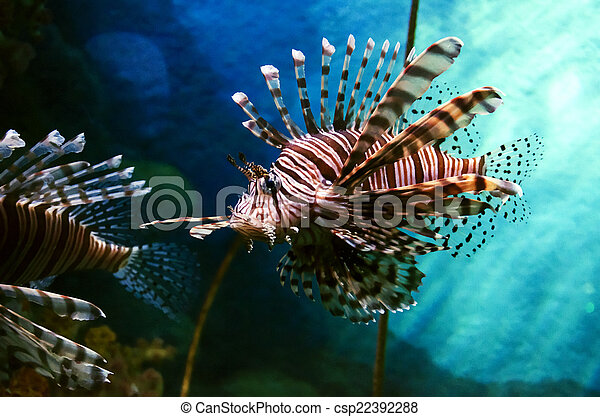 lion fish - csp22392288