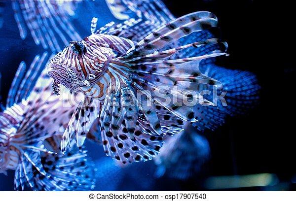 lion fish - csp17907540