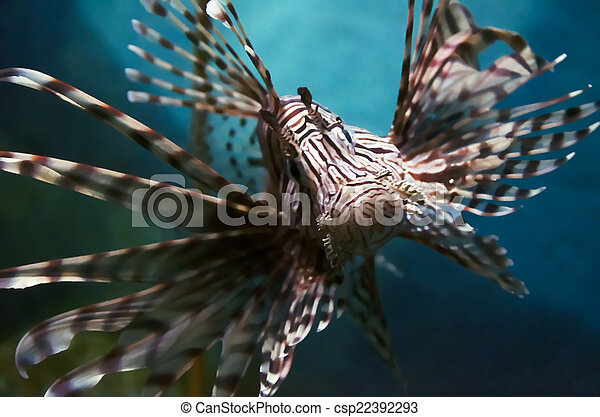 lion fish - csp22392293