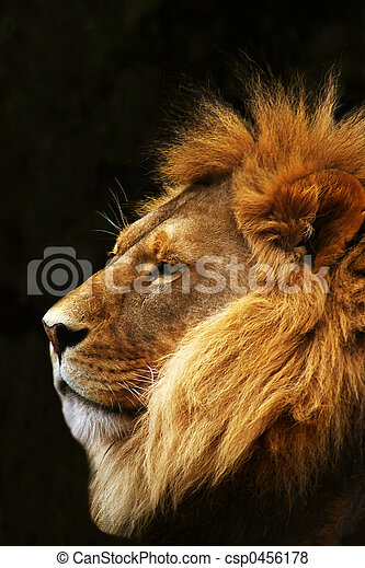 Lion in profile. - csp0456178