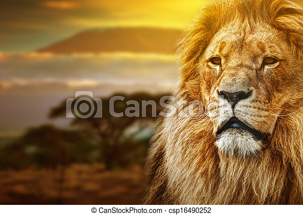 Lion portrait on savanna landscape  - csp16490252