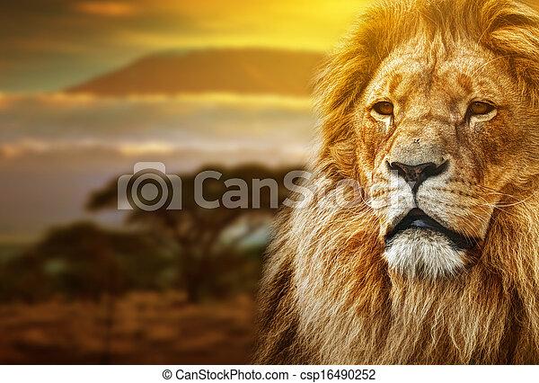 Lion portrait on savanna landscape  - csp16490252
