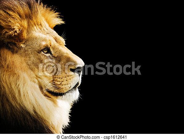 Lion portrait - csp1612641