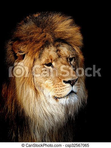 Lion portrait - csp32567065