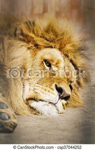 Lion Portrait - csp37044252